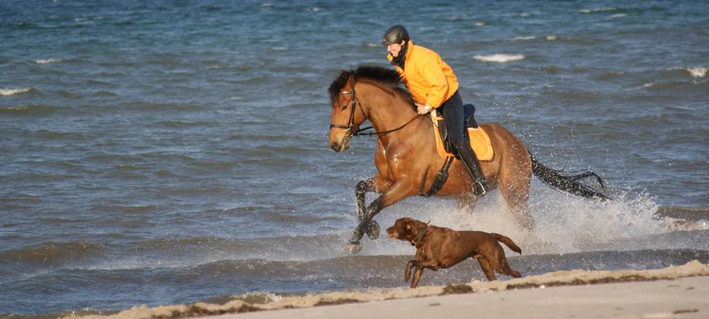 rennbahn pferd kaufen